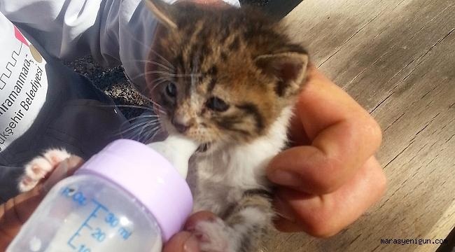 Kahramanmaraş'ta Sokak Hayvanlarına Şefkat Eli