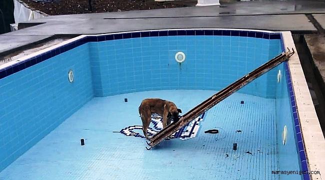 Havuza Düşen Köpeği İşçiler Kurtardı