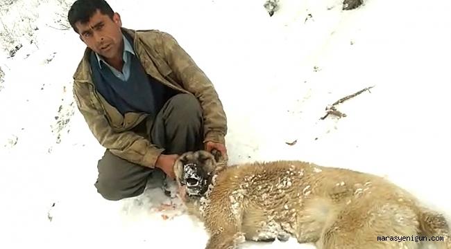Kahramanmaraş'ta Köpekleri Zehirlenen Vatandaş İsyan Etti