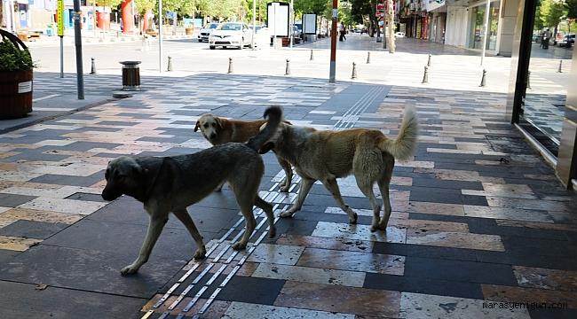 Boş Sokaklar Köpeklere Kaldı
