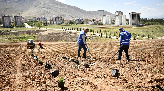Türkiye'nin En Büyük Lavanta Vadisine Ev Sahipliği Yapacak