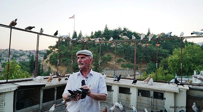Pandemi Dönemini Güvercinleriyle Geçiriyor
