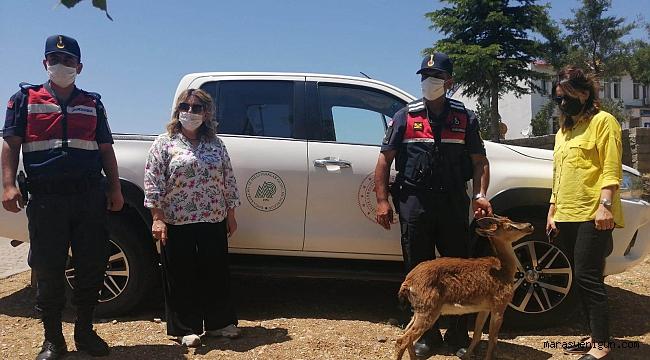 Jandarma Ekipleri Fark Etmeseydi Ölecekti