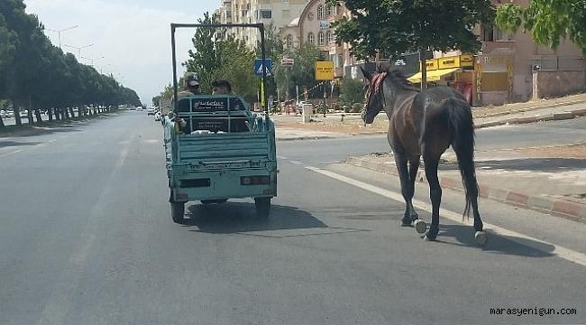 Atı Araca Bağlayıp Çektiler